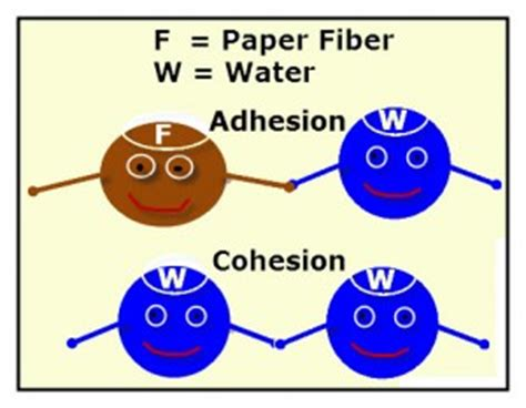 Research Paper on Biology Free Biology Essays and